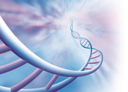 44086664_DNK