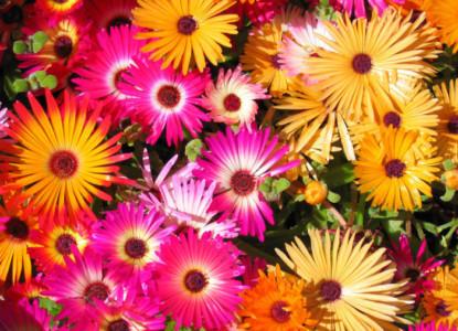 62749110_flowers_wp1152