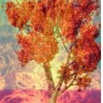 ДЛ. Зета. Любовь, признательность и благодарность – ключи к пятимерным реальностям