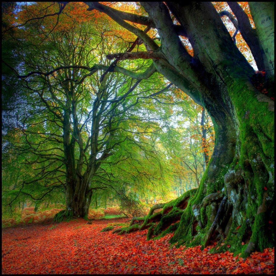 Известные деревья