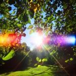 Эммануэль Дагер. Счастливого Солнцестояния!