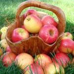 Как восполнить нехватку йода в организме - пять яблочных зерен.