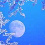 Первая Магнитная Луна - время новых начинаний в нашей жизни.