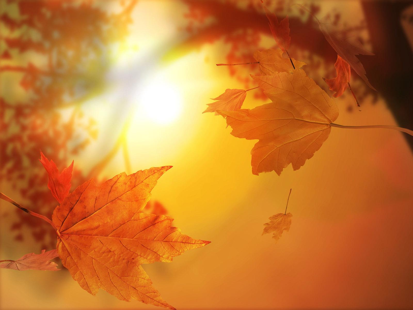 Nature___Seasons___Autumn_Sunny_Golden_autumn_108458_