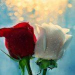 Красота земной любви