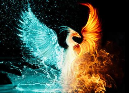 3895581-phoenix-pictures