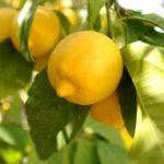 Сода и лимон - народные средства помощи здоровью