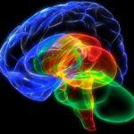 Мозг дает свободу творить свою жизнь по собственному желанию. Нейровизуализация