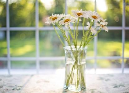 daisies-2485064_960_720