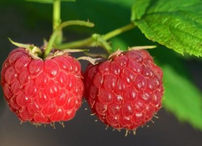 raspberry-3454504_960_720