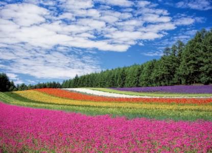 flower-field-250016_960_720