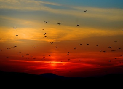 sunset-100367_960_720