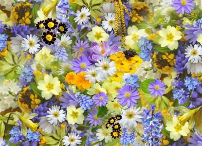 spring-flowers-110671_960_720