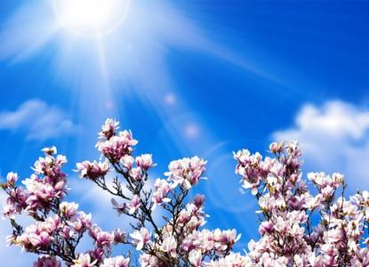 magnolia-4109989_1280