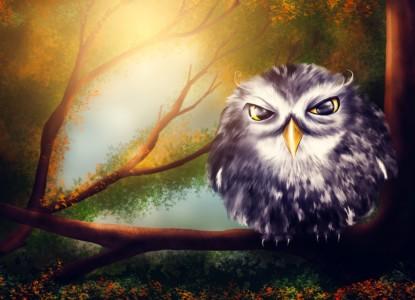 owl-2020011_1280