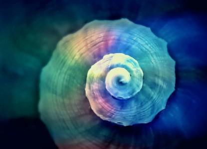 snail-822610_1280