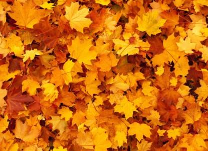 autumn-83761_1280
