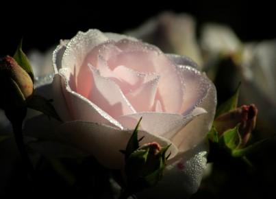 pink-2893502_1280