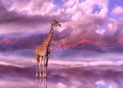 giraffe-4755025_1280