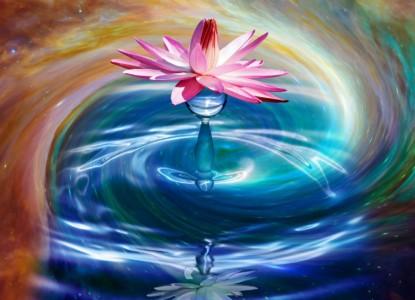 flower-3054083_1280