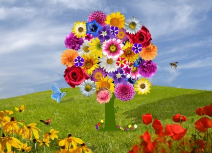 flowers-2768412_1280