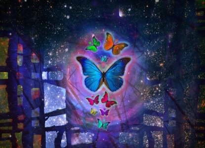 butterfly-1057516_1280