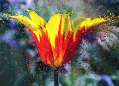 tulip-5060743_1280
