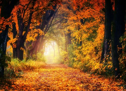 autumn-3186876_1280