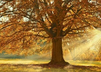 tree-4637270_1280