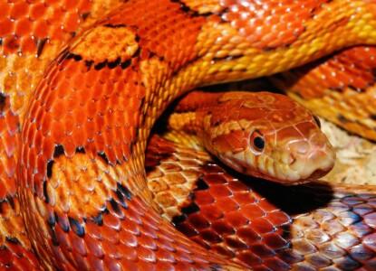 snake-579682_1280