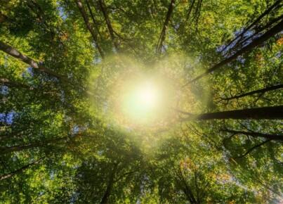trees-6617971_1280