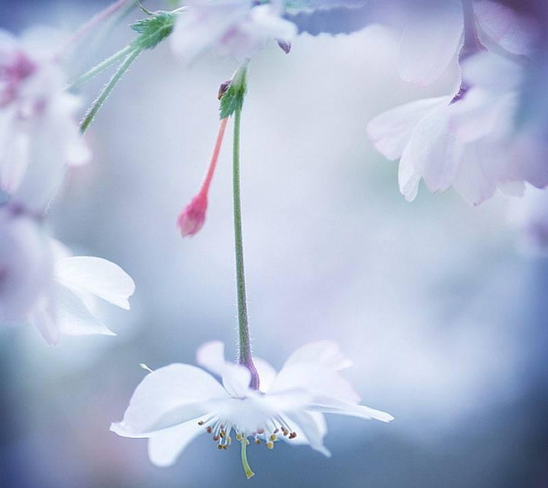 Картинки о нежности и ласке как цветочки по весне